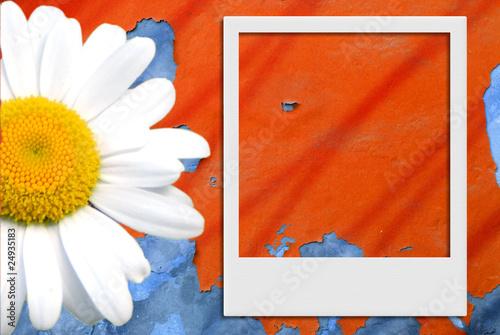 fondo marco foto polaroid y margarita © Maruba
