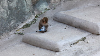Monkey sit on stair in zoo