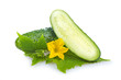 Green cucumber vegetable isolated