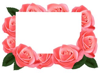 Pink roses and white paper card. Vector.