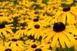 Gelbe Blumen Wiese