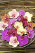 Bowl of colorful orchid with plant