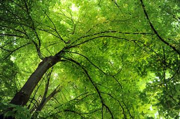 alberi 1047