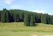 abeti alberi 1107