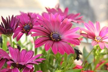 Blüten Postkartenmotiv