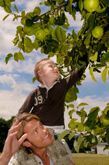 Father and Son and the apple tree