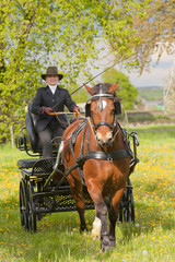 woman horse carriage