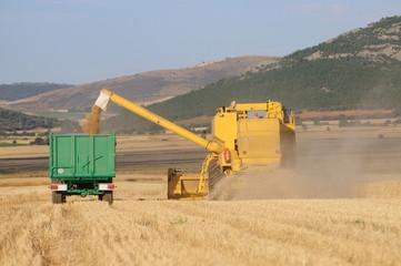 Descargando trigo