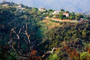 Hameau dans la montagne (Massif du Tanneron, Provence)
