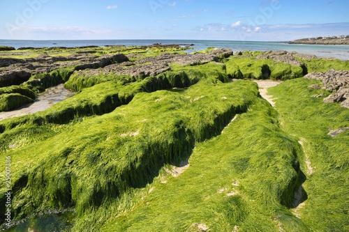 la pollution aux algues vertes - 25007386