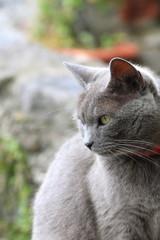 Gatto in attesa II