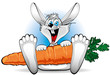 Happy Rabbit with a large carrot