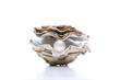 Auster, Perle - 25025706