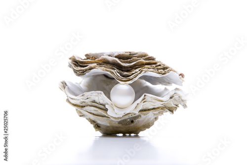 Fotobehang Schaaldieren Auster, Perle