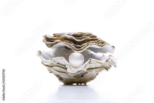Auster, Perle