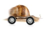 Flitzende Schnecke auf Rädern - 25050710