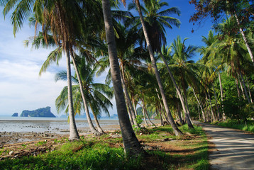 Idylic bay of a tropical island with coconut palms