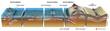 Séismes et tectonique des plaques [légende] - 25054930
