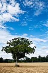 arbre isolé