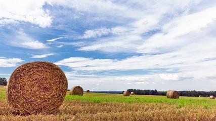 Silesian Harvest