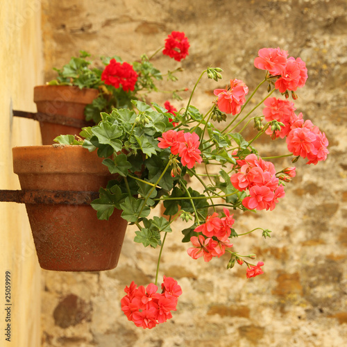 sweet flowerpot