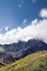 alpine Bergwiese, Hochformat