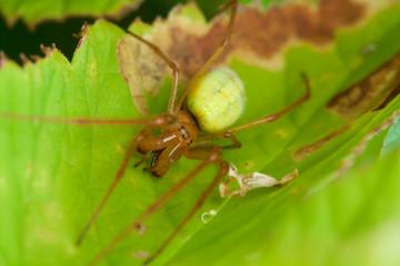 Spider in nature