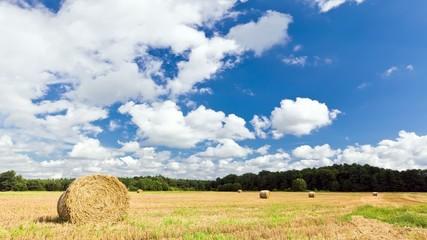 Silesian Landscape