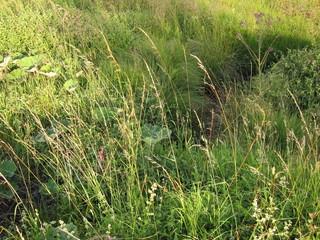 Rasenstück im Moor