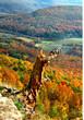 Arkansas Autumn Overlook