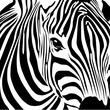 Fototapeten,zebra,zebrastreifen,vorbild,pelz