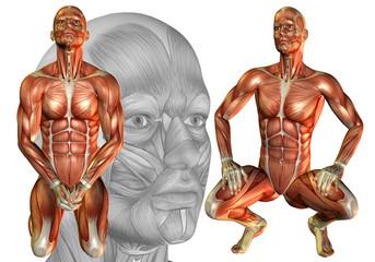 Muskelaufbau Mann hockend