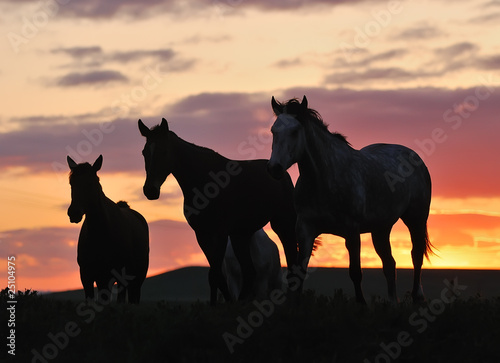 herd of horses on sunset