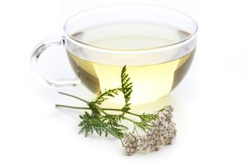Schafgarbe (Achillea millefolium) Tee mit Pflanze