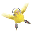 Budgerigar rollerskater in headphones