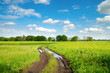 rural road with puddle in green field