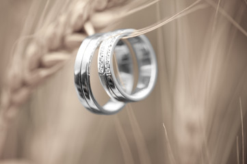 Wedding rings and wheat