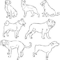 Dogs Psy