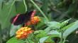 Butterfly landing a flower