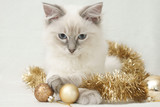 tinsel kitten