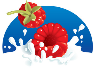 Raspberries splashing in milk or yogurt, vector illustration