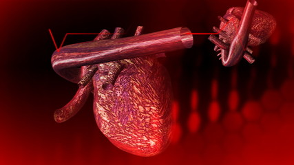 3d Beating Heart Animation in HD