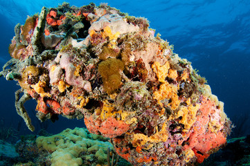 Colorful Coral Outcrop picture taken in south east Florida