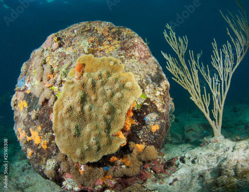 Coral encrusting on construction debris left in the ocean