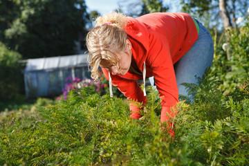 Working in wegetable garden