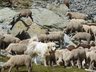 Photos illustrations et vid os de patou - Photos de moutons gratuites ...