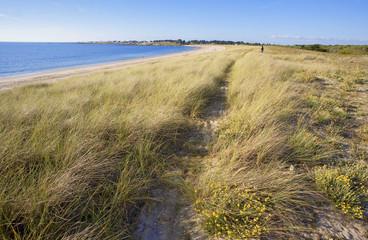 france; 85; noirmoutie : plage de luzeronde : chemin