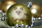 kitten in a bauble