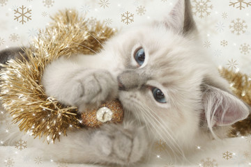 kitten playing with xmas bauble