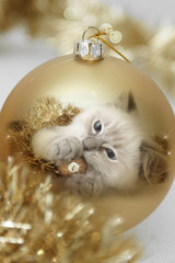 kitty in gold xmas bauble